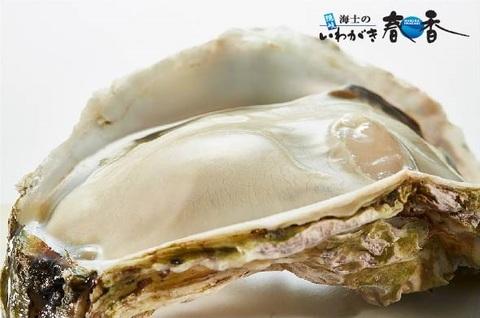 いわがき春香丸ごと凍結SSサイズ<水産物応援商品>